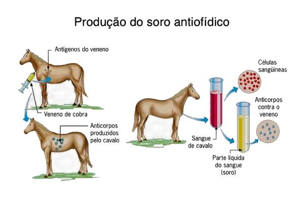 Como é feita a produção dos soros por meio dos cavalos