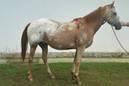 Secretaria comunica furto de cavalos do CPPI